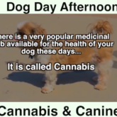 Canines and Cannabis
