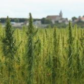 Hemp History Week – Day 6, the many Industrial uses of Hemp